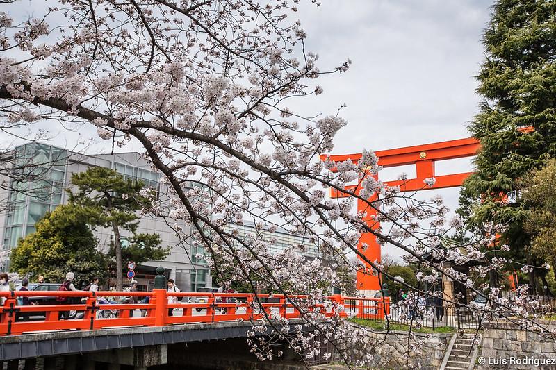 Heian-Jingu-Sakura-2