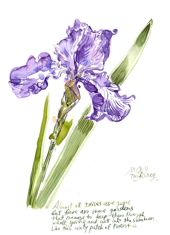 Sketchbook #104: Iris