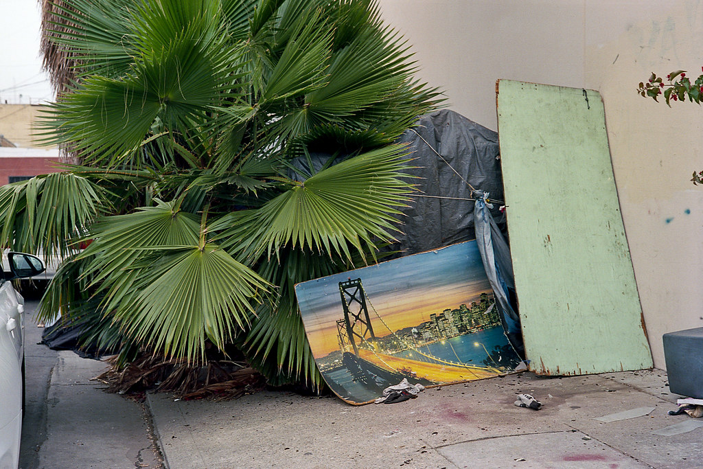 Fan palm sidewalk shelter | by ADMurr
