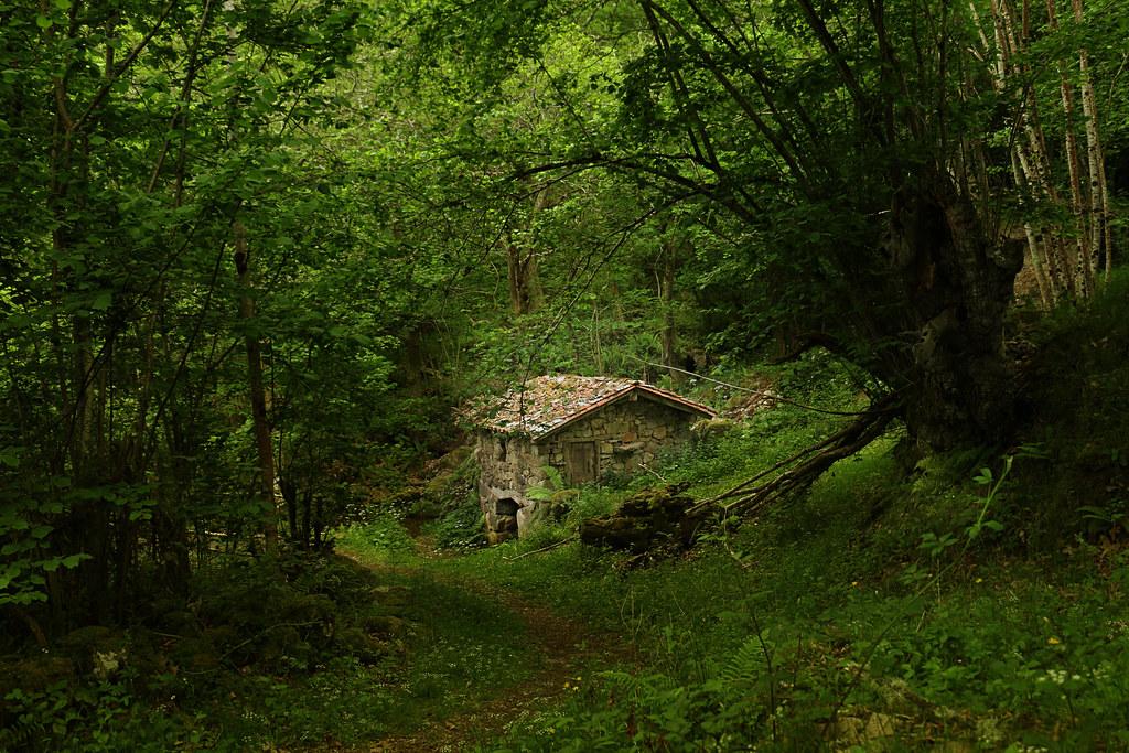 Deep in the Woods III