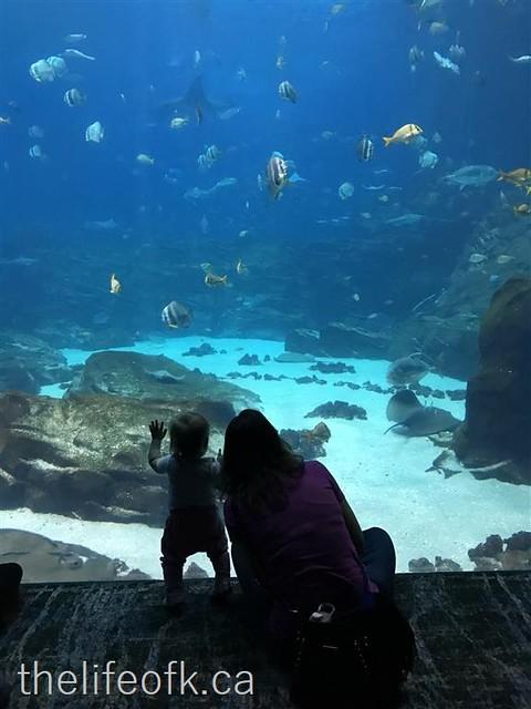 Atlanta_Aquarium5