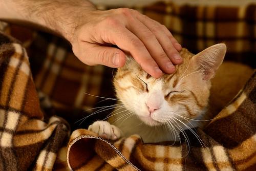 Robin, gato blanco y naranja guapo y súper dulce esterilizado, +inmunodeficiencia nacido en Marzo´15, en ADOPCIÓN ESPECIAL. Valencia. ADOPTADO. 34328272750_6c8e35d13d