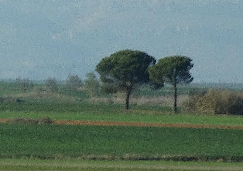 Un prado de Castilla