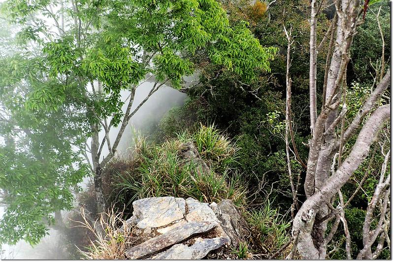 西大武山~1899峰稜線 (27)