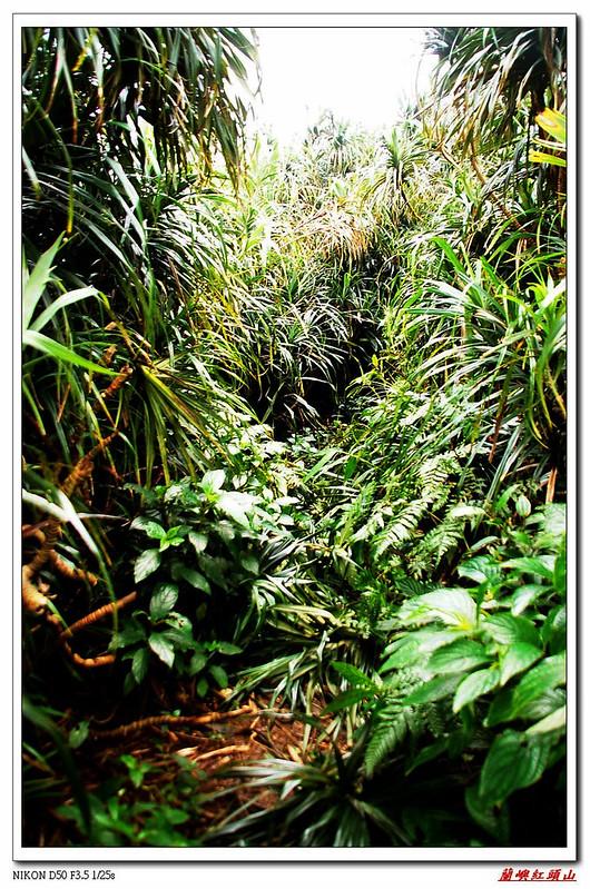 登頂前林頭林道