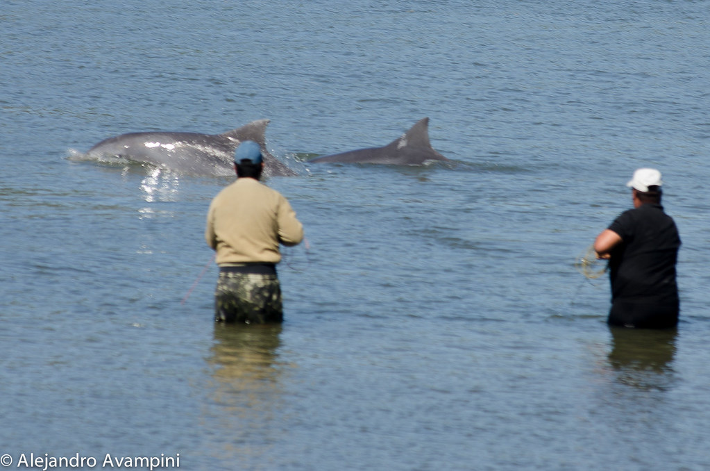 Laguna delfin de tahina1