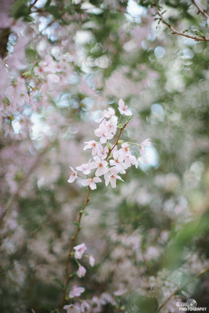 Blossom Bliss - 011
