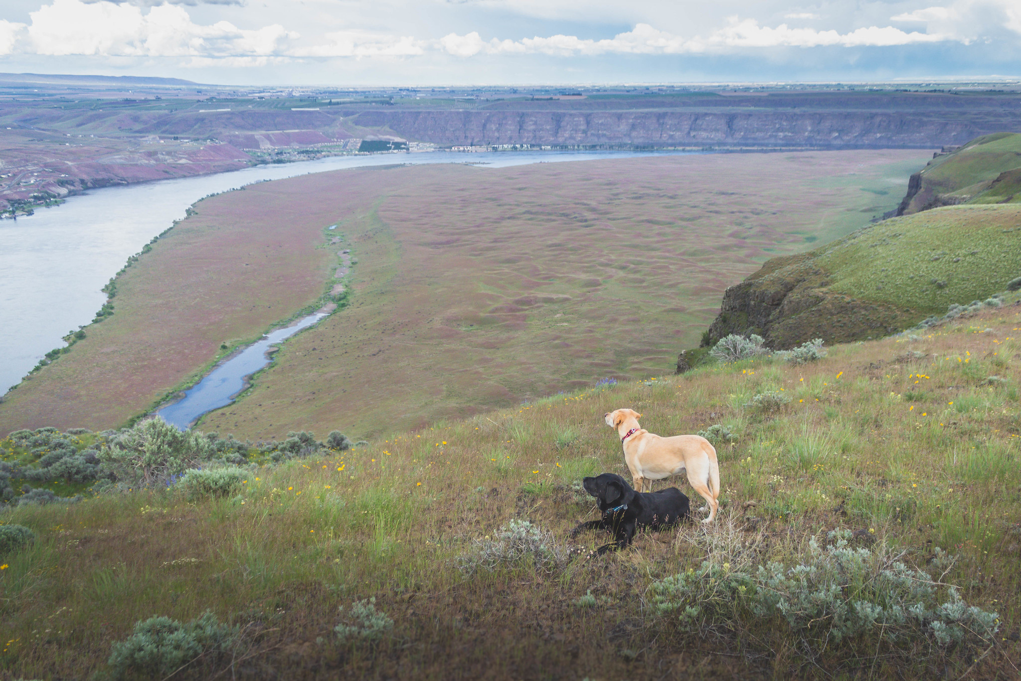 Desert dogs on Cape Horn