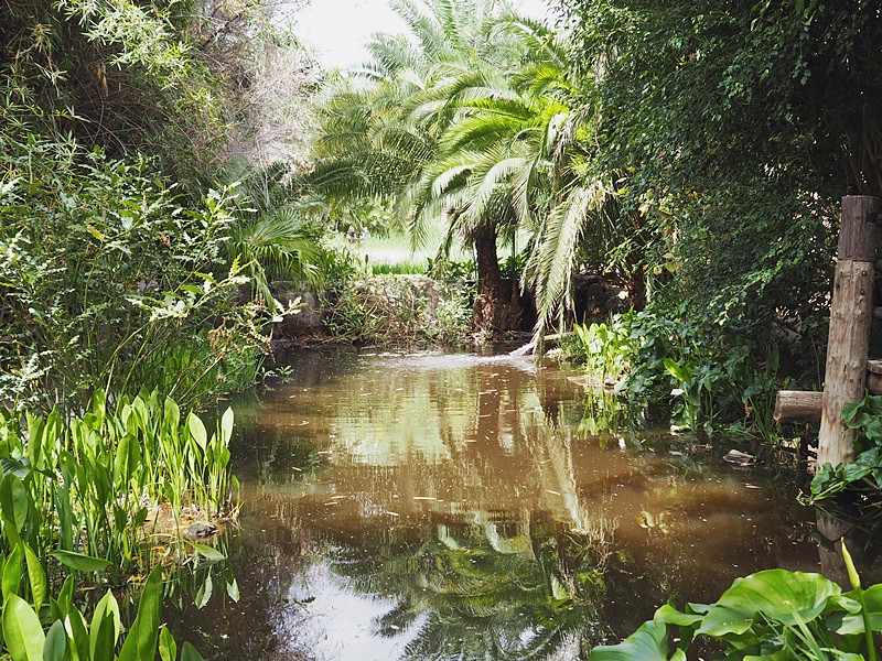 junglepark-jungle-tenerife