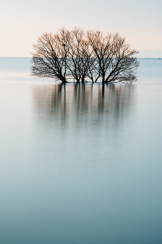 Single tree of Lake Biwa