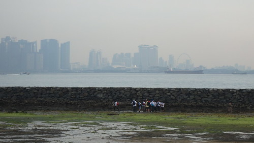 Intertidal tour at Kusu Island overlooking the city