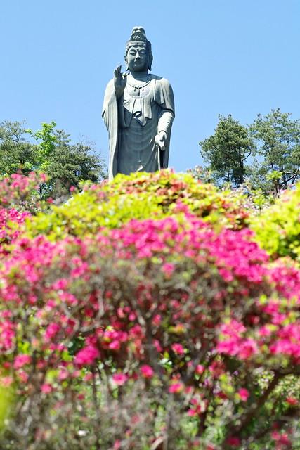 Shiofune Kannon temple Azalea Festival 2017 51