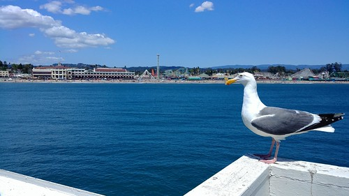 Sea Gull at the Wharf