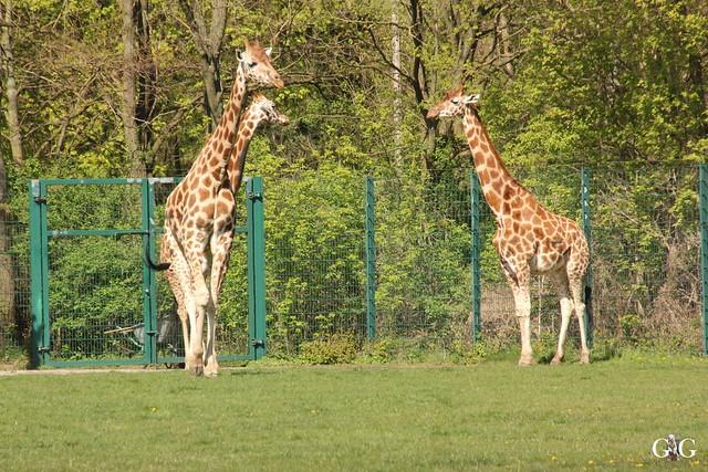 Besuch Tierpark Friedrichsfelde 17.04.1757