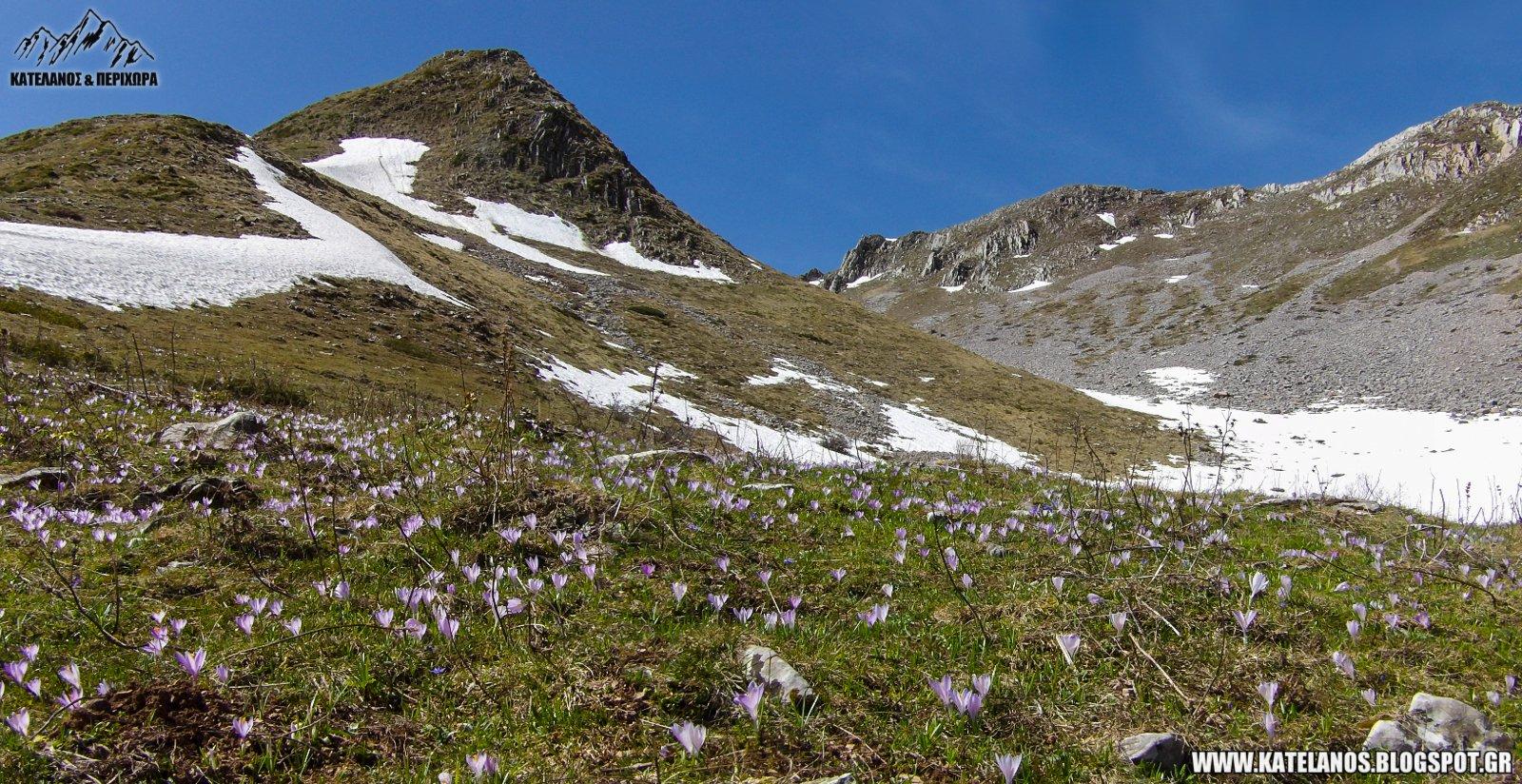 χελιδονα ευρυτανιας βουνο ανοιξη χιονουρες