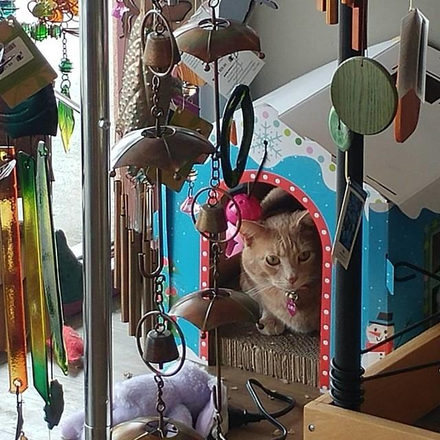 Shop kitty!