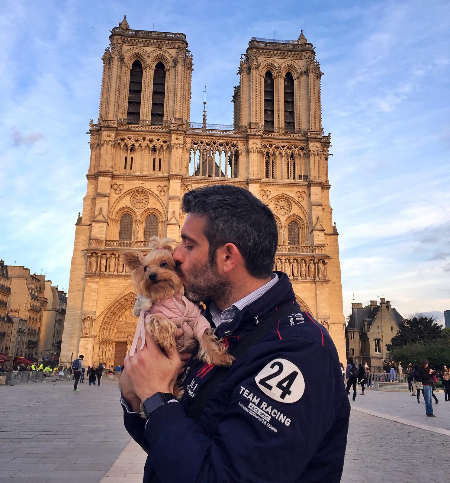 Viajar a Paris con Perro - Travel to Paris with dog viajar a paris con perro - 34560003436 24211fec2c h - Viajar a Paris con perro