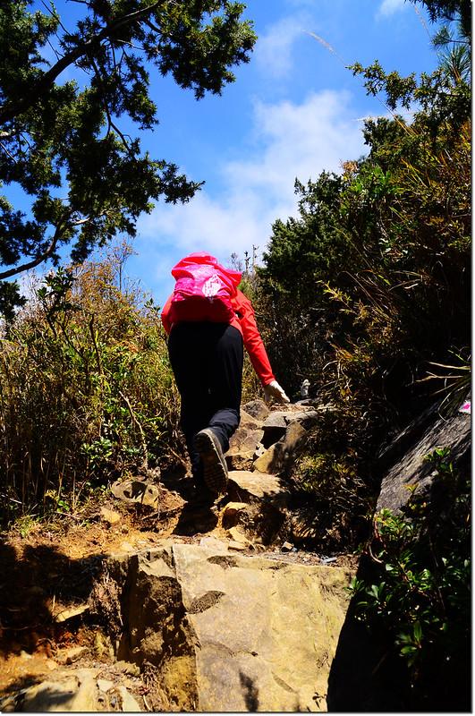 玉山前峰步道 1