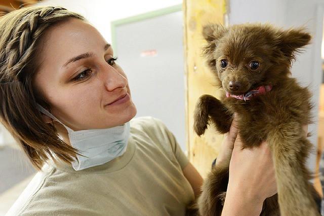puppy-919223_640