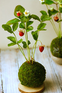 Kokedama with wild strawberry