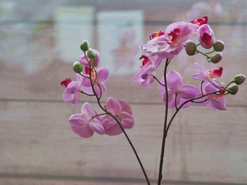 orkidea-kukka