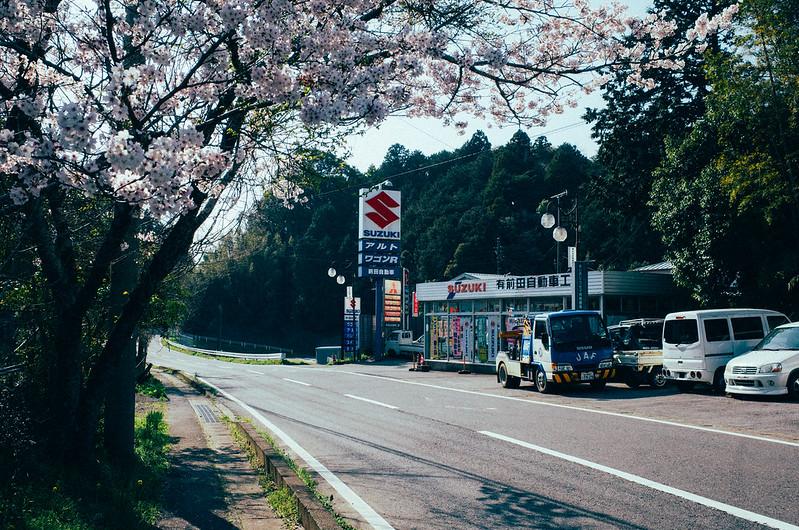 Suzuki with Sakura