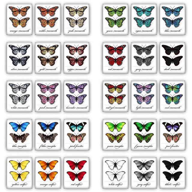 butterflies key