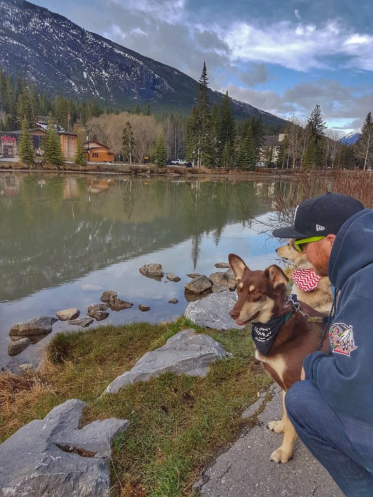 Banff Morning dogs
