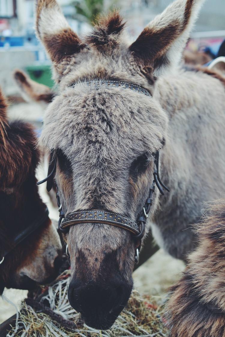 donkey weymouth