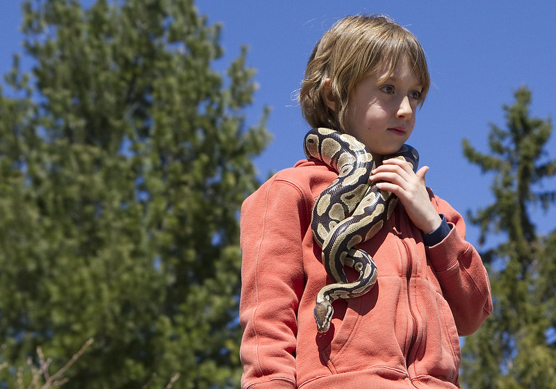 ball python and kidlet3