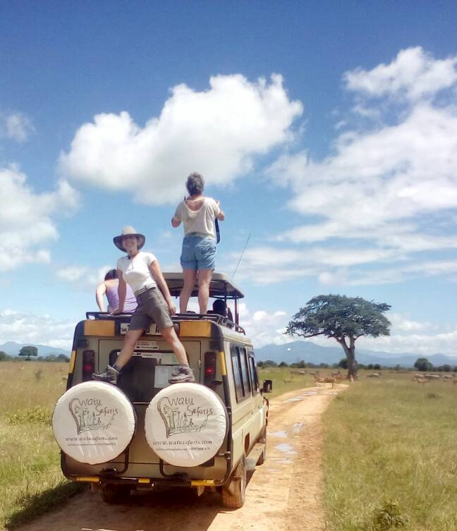 Guests enjoying game drives and the animals in Mikumi National Park