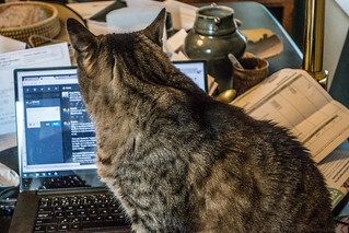 My Posts are Authored by a Cat | by Stephen Downes