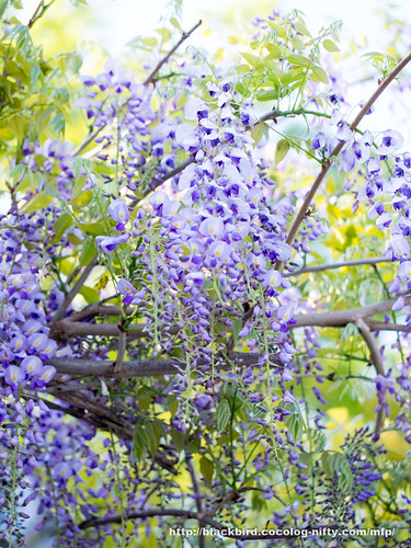 Flowers 20170428 #03