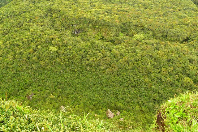 八丈富士・お鉢から見る火口の森林