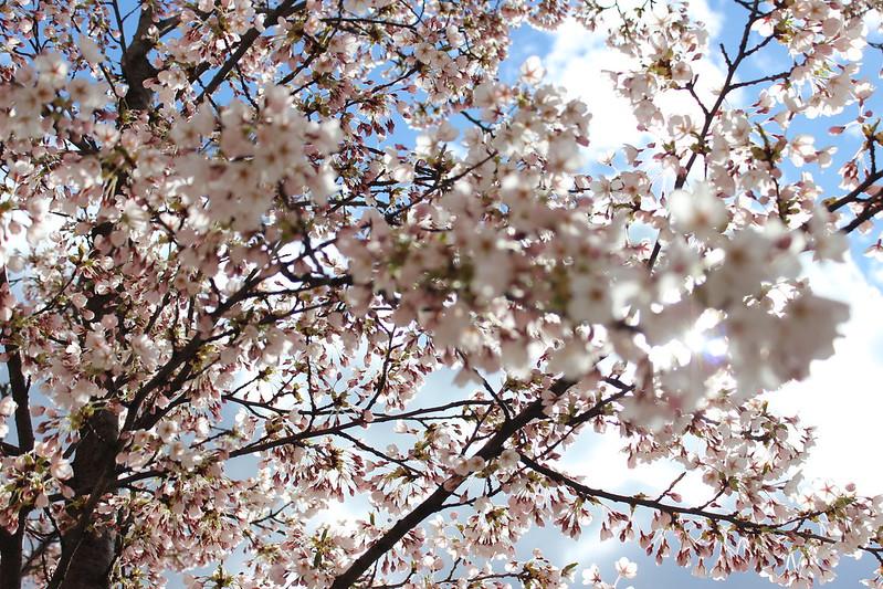 Blooms / etdrysskanel.com