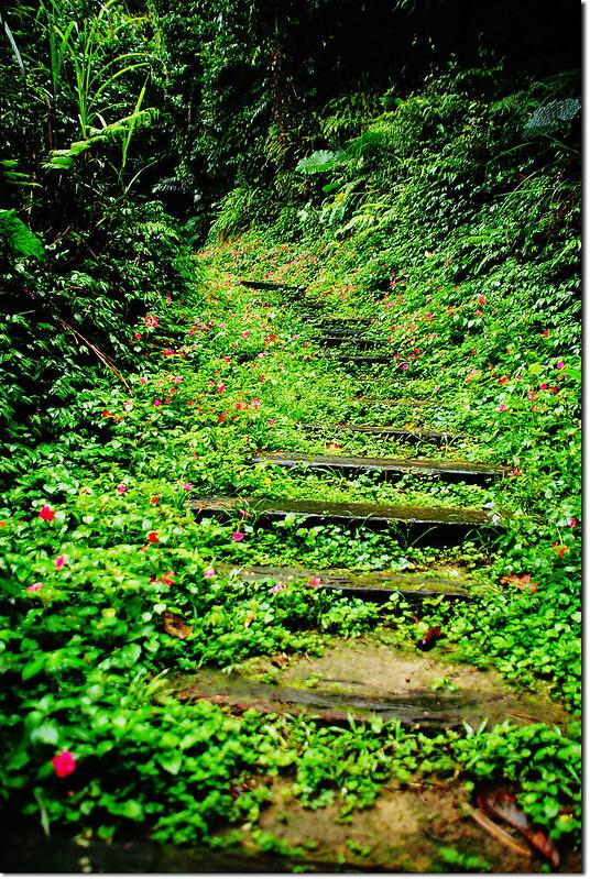 登山步道 4
