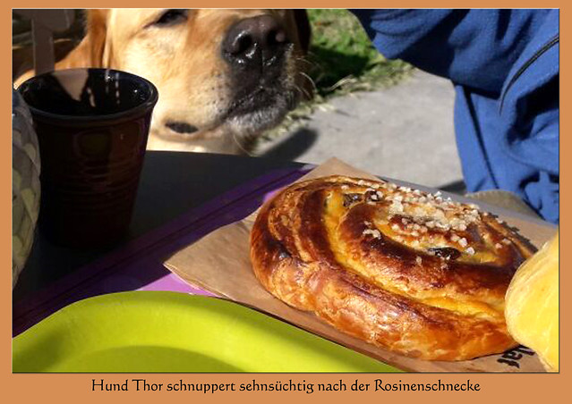 Hund Thor schnuppert sehnsüchtig nach der Rosinenschnecke / Zuckerschnecke / Schneckennudel ... Foto: V&J