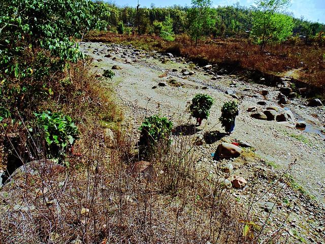 Nepali Jungle