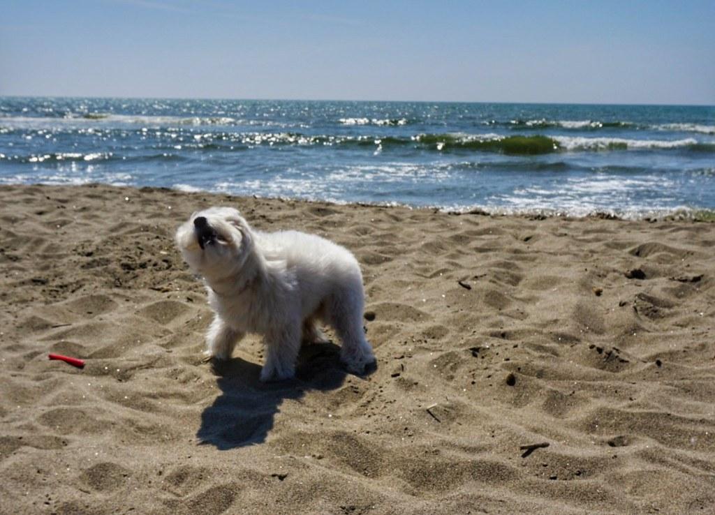 Pieni jääkarhu rannalla