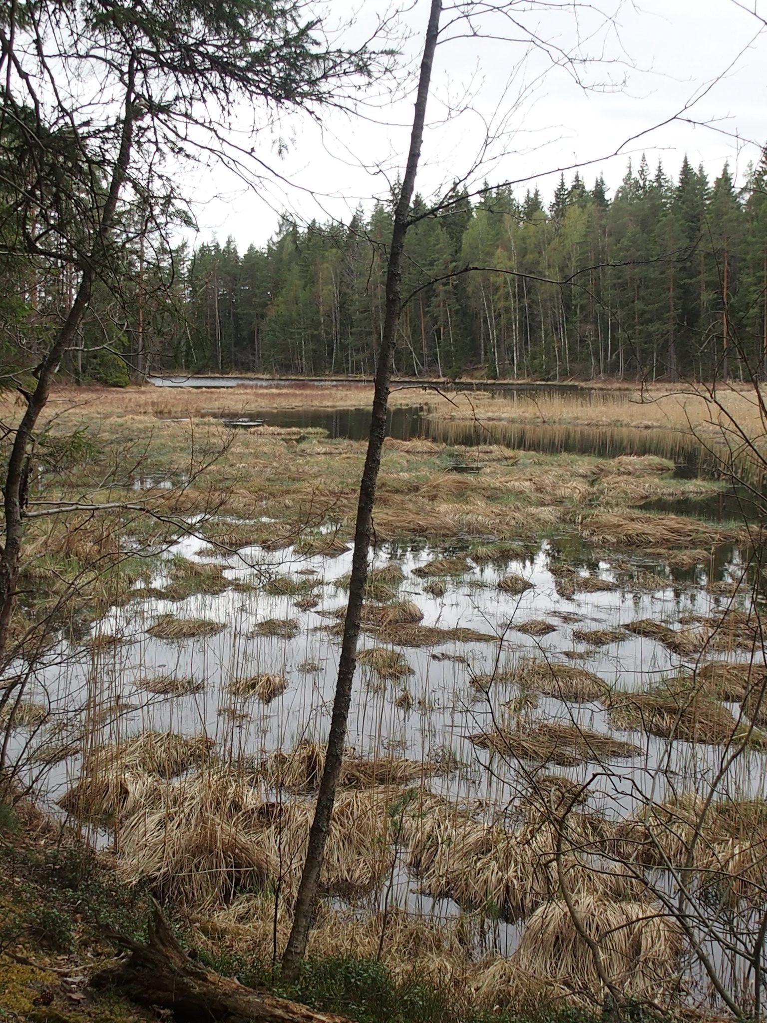 Våtmarken