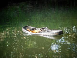 Indian River Paddling-19