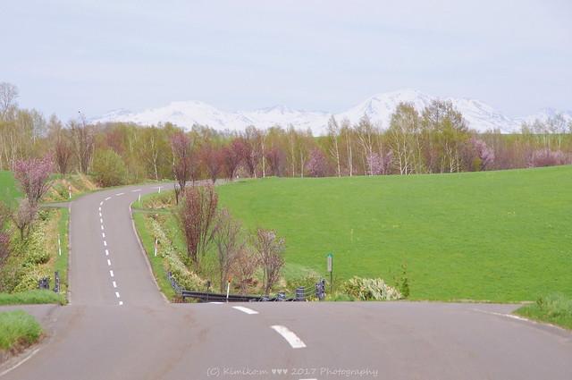 サクラ咲く丘風景⑥