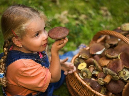 Чому дітям нерекомендується їсти гриби