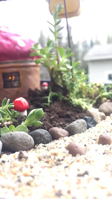 Early morning sounds from the Fairy Garden
