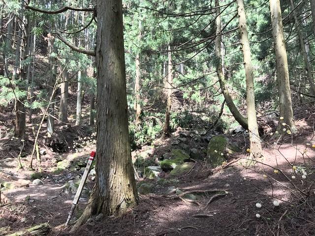 野登山 ミツマタの森 尾根谷分岐