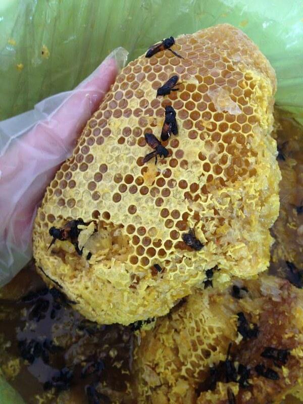 mật ong rừng pù mát nguyên tổ