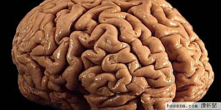 brain-760x380