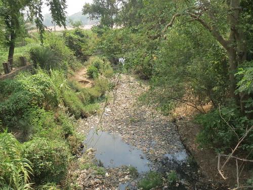 मनसरवा (मधुश्रवा नदी) नाले से होकर फल्गु में जाता है शहर का गंदा पानी