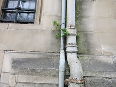 downpipe shrubbery