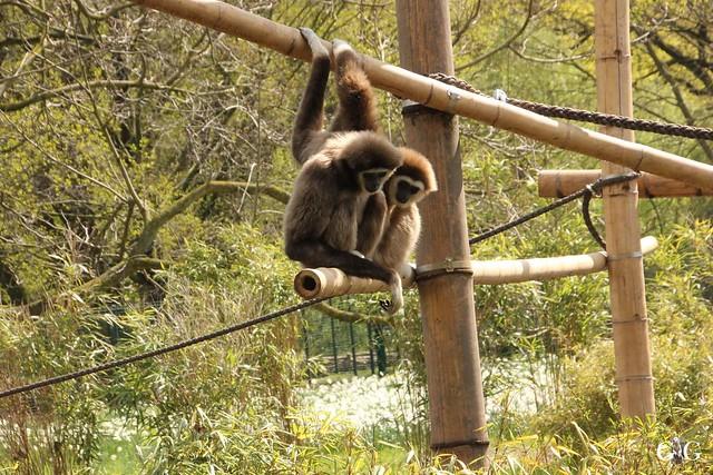 Besuch Tierpark Friedrichsfelde 17.04.1734
